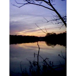 Pocomoke River, January 2009